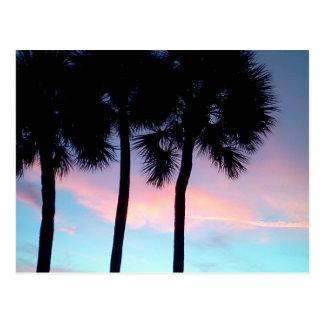Florida Sunset Plam Trees Postcard