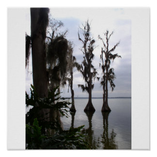 Florida swamp trees posters