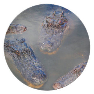 Florida Swimming Hole Dinner Plate