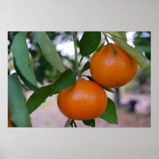Florida Tangerine Tree Poster