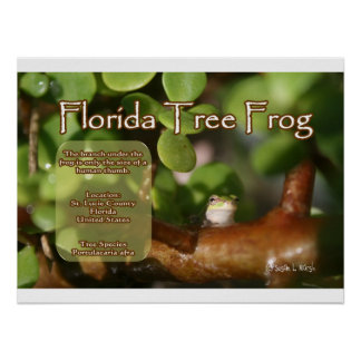 Florida Tree Frog Design with explanation text Print