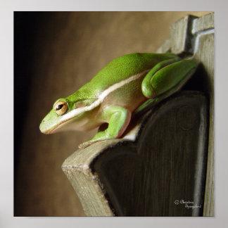 Florida Tree Frog Poster