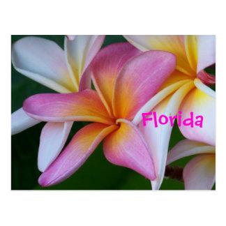 Florida Tropical Flower Postcard