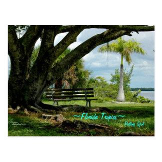 Florida tropics Resting spot Postcard