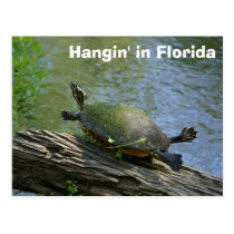 Florida Turtle postcard