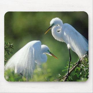 Florida, Venice, Audubon Sanctuary, Common Egret Mouse Pad