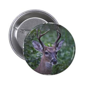 Florida Whitetailed Buck Button