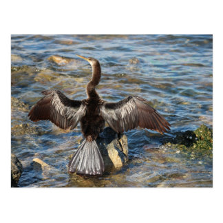 Florida Wildlife - birds Postcard