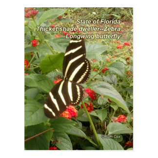 Florida Zebra Longwing Butterfly Postcard