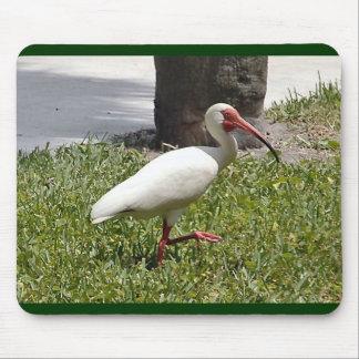 Florida's White Heron Mouse Pad
