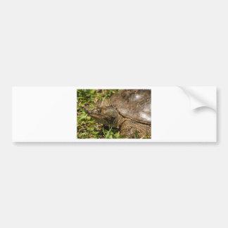 Floriday Softshell Turtle - Apalone ferox Bumper Sticker