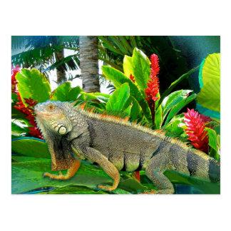 Floridian Iguana POSTCARD