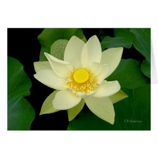 Flotación amarillo claro waterlily tarjeta de felicitación