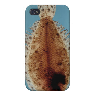 Flounder iPhone 4 Cases