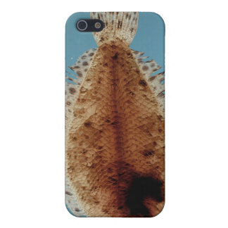 Flounder iPhone 5 Covers