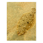 Flounder Postcards