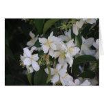 Flower3 Tarjeton