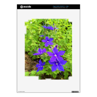 flower6.JPG Decal For The iPad 2