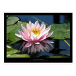 Flower 007 Water lily Postcard
