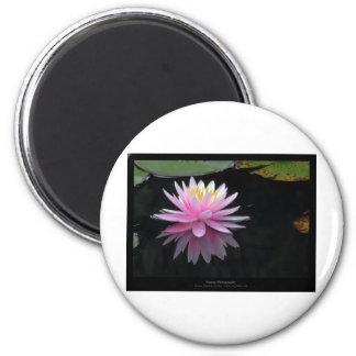 Flower 017 Pink Water Lily Fridge Magnet