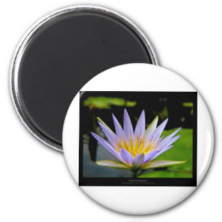 Flower 026 Blue Water Lily Magnet