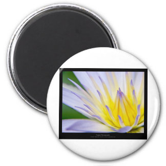 Flower 028 Blue Water Lily Fridge Magnets