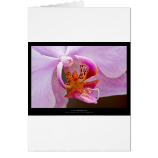 Flower 034 Pink orchid Card