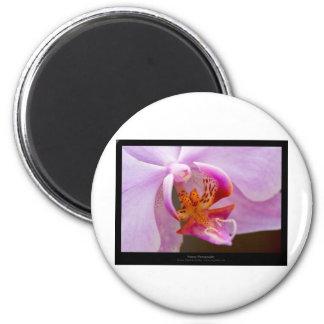 Flower 034 Pink orchid Magnet