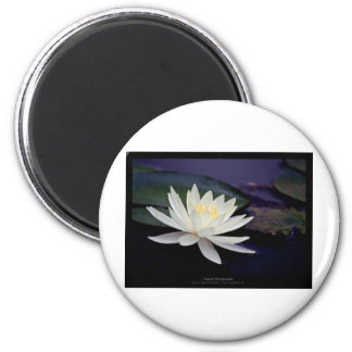 Flower 039 White Water Lily Refrigerator Magnet