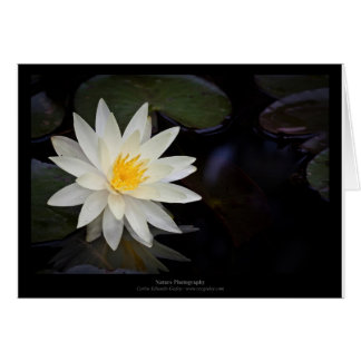 Flower 055 White Water Lily Card