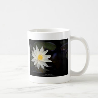 Flower 055 White Water Lily Coffee Mugs