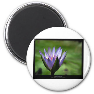 Flower 058 Blue Water Lily Magnets