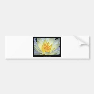 Flower 061 White Water Lily Bumper Sticker