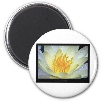 Flower 061 White Water Lily Magnet