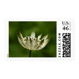 Flower 10 stamp