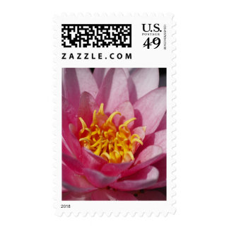 Flower  1 postage stamps