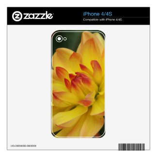 FLOWER 21 iPhone 4 DECAL