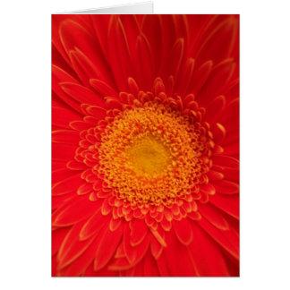 Flower 22 Card