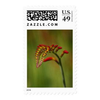 Flower  2 postage