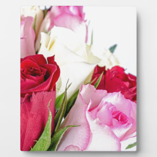 flower-316621 flower flowers rose love red pink ro photo plaque