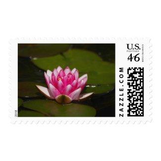 Flower 4 stamp