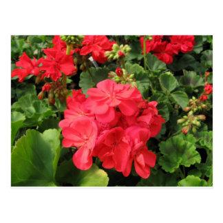 Flower 4 postcard