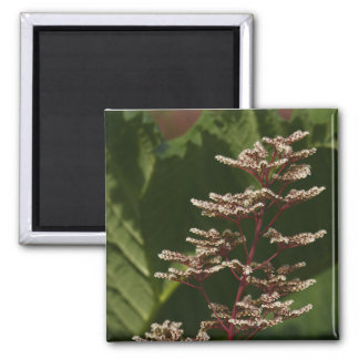 Flower  8 2 inch square magnet