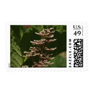 Flower  8 postage stamp