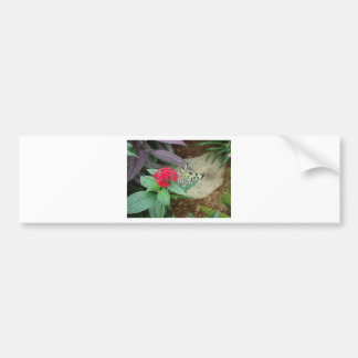 Flower and butterfly bumper stickers
