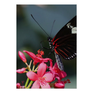 Flower and Butterfly mf Posters