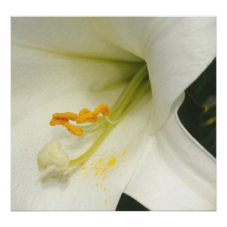 Flower And Stamen Poster