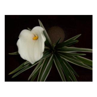 Flower Arrangement Series - 2 Postcard