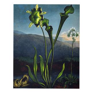 Flower Art Forms Bog Plant