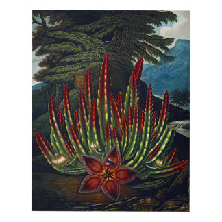 Flower Art Forms Maggot-Bearing Stapelia Panel Wall Art